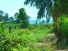 LAND FOR SALE - 1 RAI 334 TLW